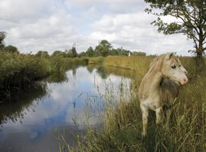 ponies on the broads